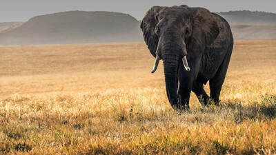 Run Wild–African Safaris